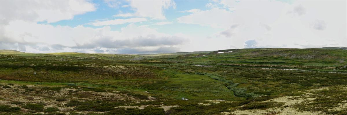 Hardangervidda . Norwegen